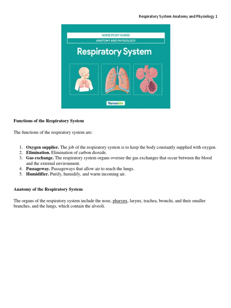 RESPIRATORY SYSTEM ANATOMY AND PHYSIOLOGY.docx | Respiratory Tract ...