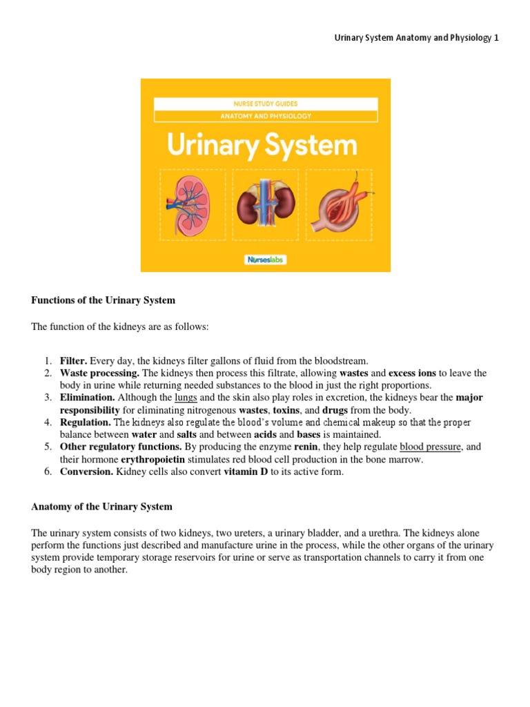 Urinary System Anatomy and Physiology | Kidney | Angiotensin