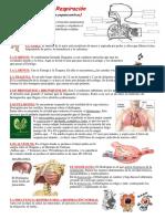 Anatomía de la respiración.pdf
