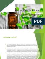Extraccion de Aceitie Esencial de menta