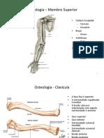 Osteologia – Membro Superior