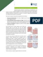 3. Reparación y factores de crecimiento.docx