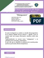 matagusano -farmacognosia