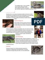 15 Animales de Guatemala