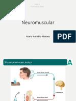 Aula 5 - Neuromuscular