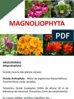 Magnoli Op Hy Ta
