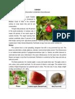 Cashew Planting Techniques