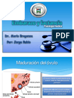 embarazoylactanciafisiologia-130518220553-phpapp02
