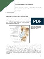2. Notiuni de Anatomie Clinica a Nasului