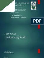 Puccinia Melanocephala.pptx