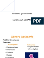 Neisseria gonorrhoeae.ppt
