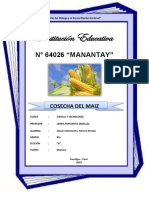 Cosecha Del Maiz