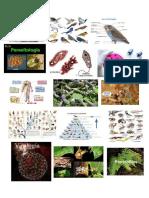 imagenes de biologia.docx