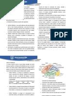 Separata 01 - Estructura y Funcionamiento Del Cerebro