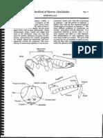 ChalcidoidKey2.pdf