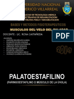 Musculos Del Velo Del Paladar