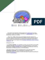Sistema nervioso completo_0.pdf