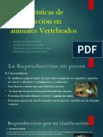 Características de Reproducción en Animales Vertebrados