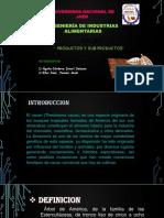 TODO 19 Fermentacion Del Cacao