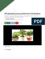 20 Plantas Para Ambientes Fechados _ CLAUDIA