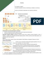 Aula 11 Plano de Aula Bioquímica Proteínas
