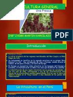 Uva de Mesa 1.pptx