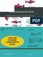 Cromosomas en Peces