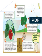esquema fotosintesis.docx