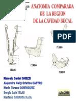 Esqueleto Cavidad Bucal