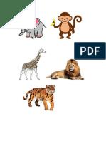 Gambar Haiwan Liar