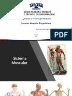 ANATOMIA 6.pdf