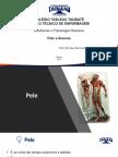 ANATOMIA 4.pdf