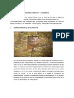 HISTORIA CHINCHAO 1.docx