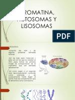 cromatina, histonas y cromosomas (1).pptx