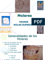 286558842 1er Molar Superior Ppt