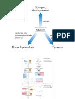 15 Glicolisis y catabolismo de hexosas y pentosas.ppt