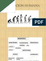 2.- Evolución humana 2014.pptx
