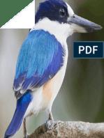 Bird in Blues