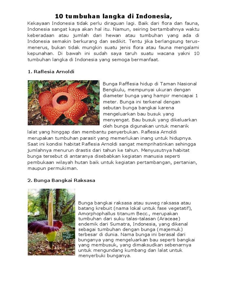 53 Gambar Hewan Langka Dan Tumbuhan Langka Di Indonesia HD Terbaik