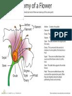 anatomy-of-flower (1).pdf