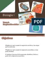 Biol I_T6 Respiración