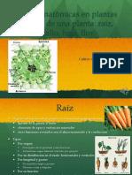 Bases Anatómicas de plantas