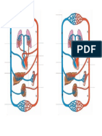 Circulatorio Mudo
