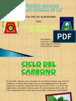Ciclo Del Carbono y Ciclo de Nitrogeno (1)