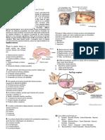 268070961 Evaluacion Sistema Nervioso Octavo 2015