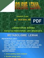 metabolismelemakbs1-121001111236-phpapp02