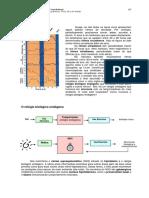 15ritmos_biologicos.pdf