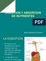 digestion y absorcion de nutrieentes