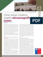 Ultrasonografía en Ovinos