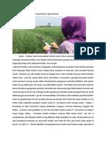 Kerusakan Tanah Pertanian Bawang Merah Capai 50 Persen